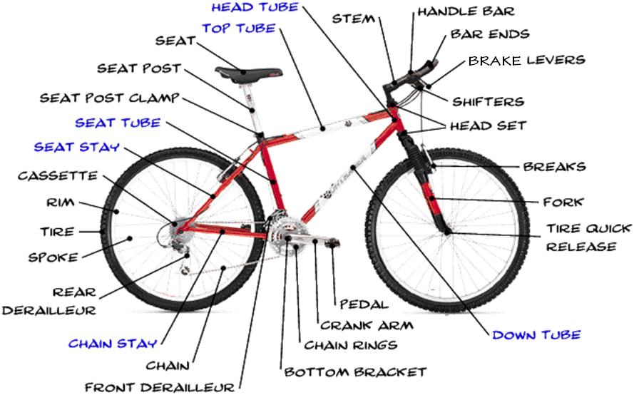 Bicycle Anatomy 2 - Pedalsaddle